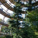 Der imposante Baumturm in Neuschönau