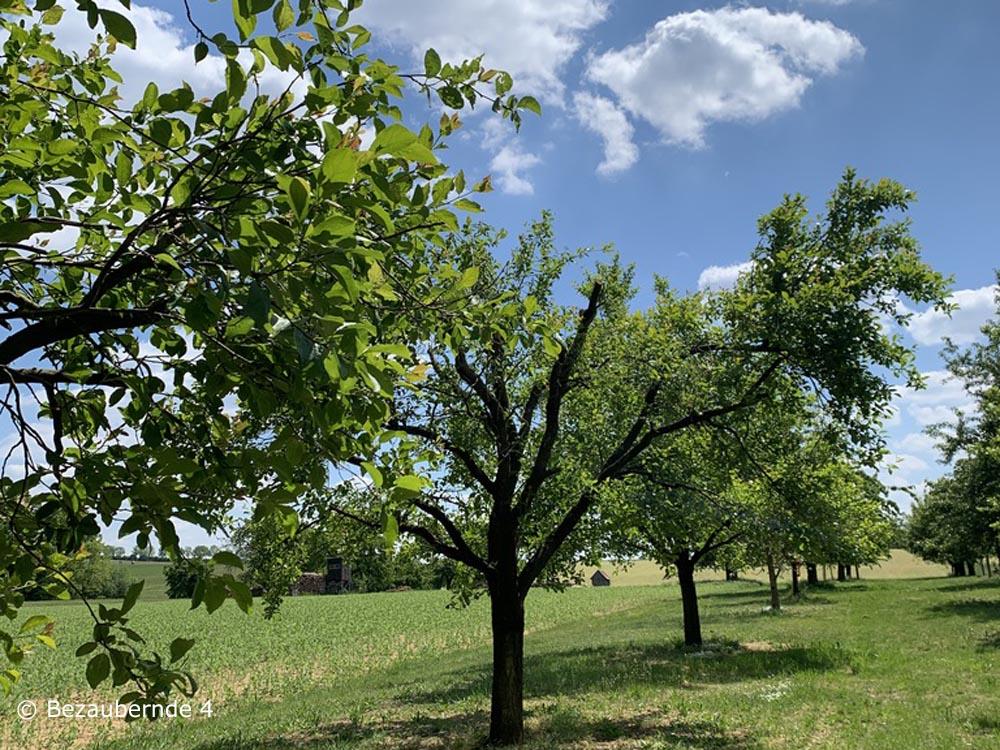 Die Bäume stehen nicht mehr in der Kirschblüte, dennoch eine tolle Wanderung