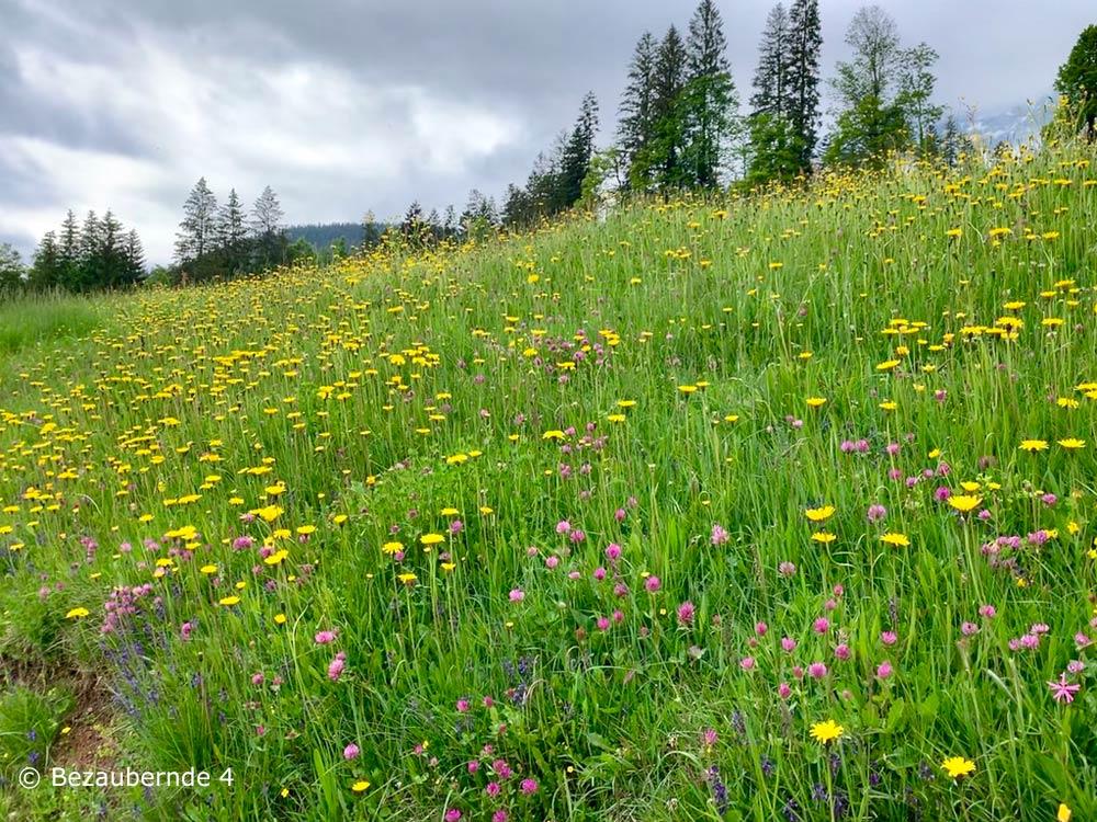 Wiese bei der Moor & more Törfchen-Runde am Wilden Kaiser