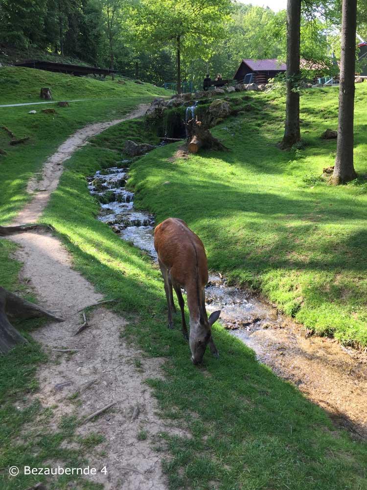Der Wildpark Hundshaupten ist der bekannteste Wildpark in der Umgebung von Nürnberg