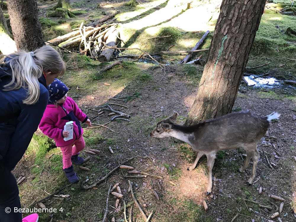 Rund 120 Tiere leben im Wildpark Hufeisen in der Umgebung von Nürnberg